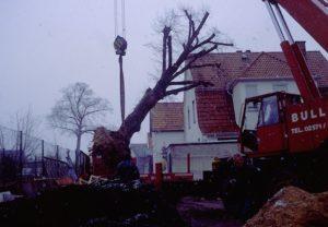 ein Großbaum wird verpflanzt...