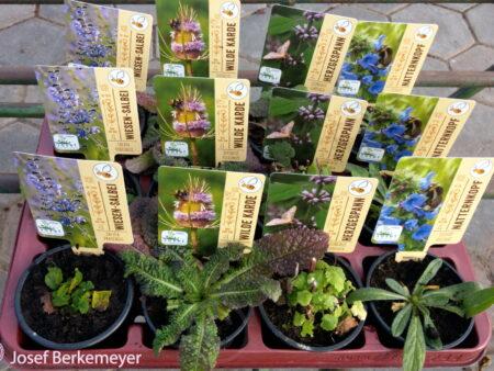 12 Stck. heimische Wildpflanzen  <br> in 3 verschiedenen Sorten
