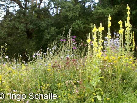 Schmetterlings- und Wildbienensaum, <br> 5 gr. für 3-5 qm