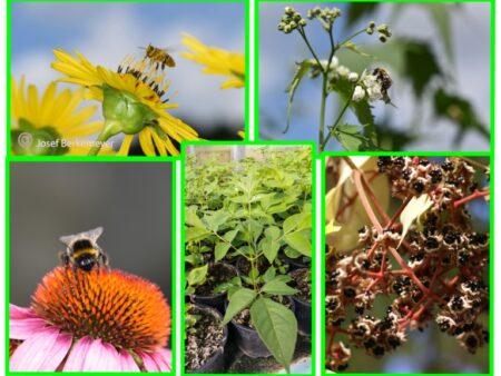 10 Stck. Bienenweide / Insektenpflanze 'besondere Mischung'